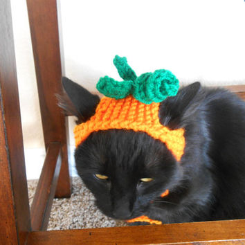 Knit Cat Hat  - Knit Pumpkin Hat- Cat Halloween Costume - Pet Halloween Costume - Cat Photo Prop - Knit Pumpkin Hat for Cat or Kitten