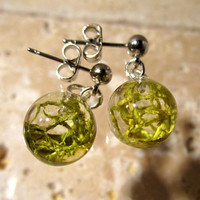 Wolf Lichen (Letharia vulpina) Earring, Moss Jewelry, Plant Jewelry, mycology, fungi, woodland, nature, Okanagan