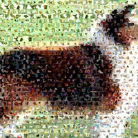 Amazing Collie Dog Montage Limited Edition with COA