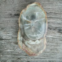 Petrified Wood, Blue Petrified Wood, large pendant size for wire wrapping, can be used as display also, polished both sides, from U.S., 3""