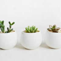 Little Egg Shape Oval Succulent Planter-White Porcelain Succulent Planter Pot-With Hole on Bottom-Modern Minimalist-Home Decoration