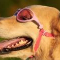 Pink Rubber Sunglasses