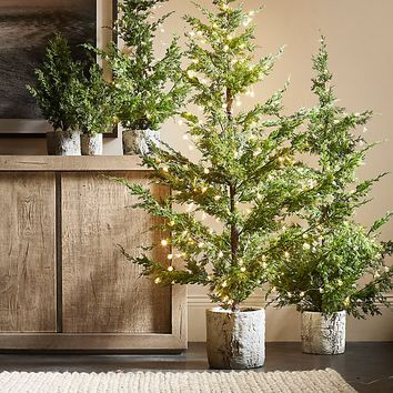 Faux Juniper Potted Tree Collection