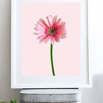 Gerbera poster. Flower photography. Daisy flower. Spring flowers.Nature photography. Pink flowers. Instant download