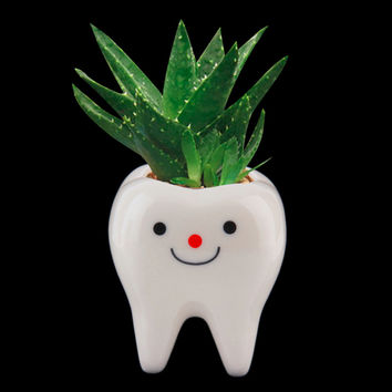 Cute Tooth Succulents Pots | Design Creative Teeth Flower Fairy Garden Cacti Landscape Pot Planter Decoration Home DIY Office Table Wedding