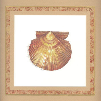 """Pacific Scallop Shell 10"""" x 10"""" custom matted lithograph"""