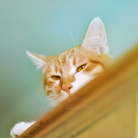Ginger cat on cupboard Instant Digital Download Art Photography Printable, blue and yellow, for cat lovers, animal photography vintage style