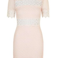 Mesh Detailed Mini Dress - Dresses - Clothing