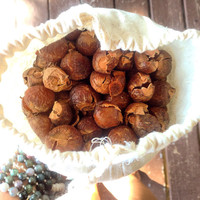 Soap Nuts - plant laundry cleaner