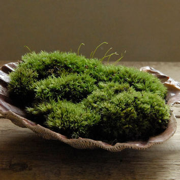 Scallop Shell Moss Planter Large by Vertegris on Etsy