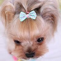 Dog/Puppy Hair Bow Clips - 5 Pcs