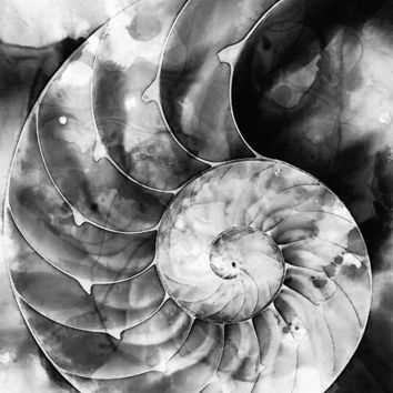 'Black And White Nautilus Shell By Sharon Cummings' by Sharon Cummings