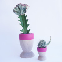 Small Wooden Planters, Fall | Winter Colors