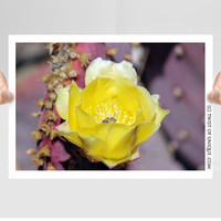 Cactus flower Photography/ OPEN EDITION prints / Yellow Cactus flowers and Bee Photography / Yellow, Purple, Purple cactus