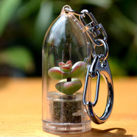 Baby's Necklace Succulent Keychain