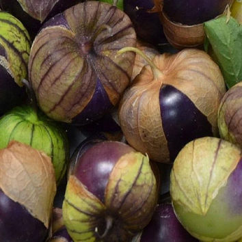 Tomatillo Purple Appx 100 seeds Vegetables