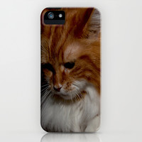 Maine Coon Zora (in Memory) iPhone & iPod Case by Fine2art