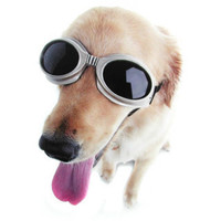 Doggles - buy at Firebox.com