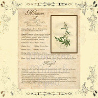 MAGICK HERB MUGWORT, Digital Download,  Book of Shadows Page, Grimoire, Scrapbook, Spells, White Magick, Wicca, Witchcraft, Herb Magic