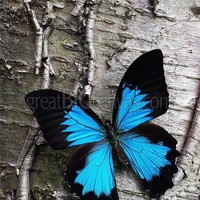 Zoom: Blue Butterfly on Birch | Great Big Canvas