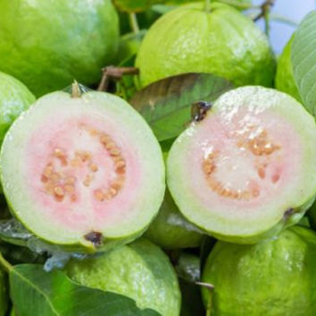 20 Guava Seeds Delicious Sweet Fragrant Tropical Fruits Plant Non GMO Transgenic Plants Garden Home Decor