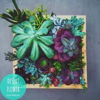 Mixed Succulents Planted in Handmade Timber Vertical Hanging Planter Box 32x32cm