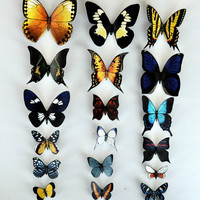 Butterfly Moth Magnets, Tropical Rainforest Canopy Butterflies, Wholesale Lot of 18 Insects Refrigerator Magnets