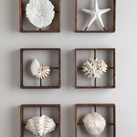 Faux Coral Shadowboxes