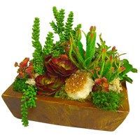 Succulents & Citrine in Wood Box