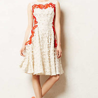 Aster Flared Dress