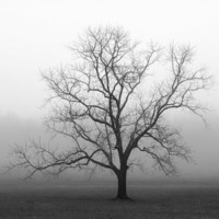 Black and white photography / trees / landscape photography / tree photography / winter tree / 8 x 10 print