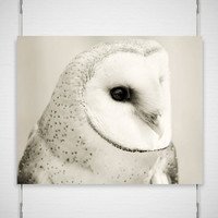 Winter Owl Photography Pale Jewel 8x10 speckled by jpgphotography