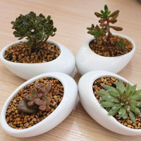 Egg Shape White / Black Ceramic Container -- for water plants, succulents, dried flowers, tea light holder