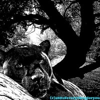 black panther in tree big cats printable art downloadable digital image graphics nature printable jungle safari animal artwork