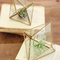 Set of 2 Glass & Metal Multi Faceted Terrariums