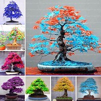 Rare Blue Maple Seeds Bonsai Tree Plants Pot Suit for DIY Home Garden Japanese Maple Seeds 20 Pcs / Kinds Free Shipping