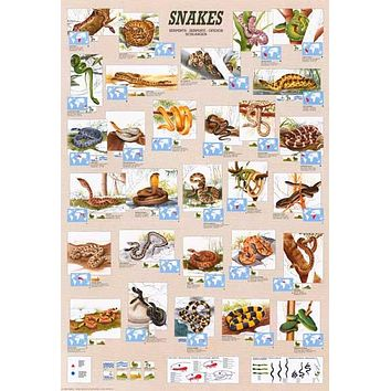 Snakes Reptiles Serpents Education Poster 27x39