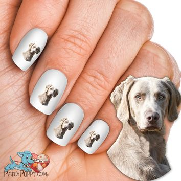 Weimaraner Face Forward Portrait Nail Art (NOW 50% MORE FREE)