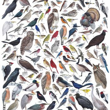 Birds of Eastern and Central North America Puzzle