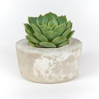 Concrete Planter Modern Home Decor Office Planter