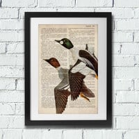 The ducks - art print on vintage encyclopedia paper. Recycled art. Eco paper. Duck painting, duck art, duck decor, duck hunting. Gift.