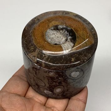 """223g, 2.2""""x2.4"""" Brown Fossils Ammonite Jewelry Box from Morocco, F2472"""