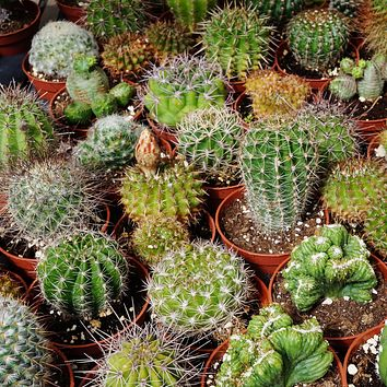 Outsidepride Succulent Cactus Plant Seed Mix - 1000 Seeds 1 A) 1000 Seeds
