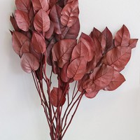 Preserved Salal Leaves in Burgundy - 4oz Bunch