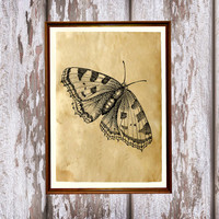 Antique art Insect decor Cabin poster Butterfly print AK234