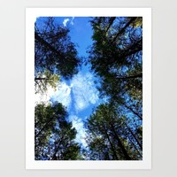 Nature Photography Collection By Sophie B. | Society6