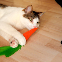 Cat toy felted catnip filled carrot, cat nip organic toy with natural died feather, perfect toy for your animal
