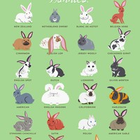 BUNNIES Art Print by DoggieDrawings