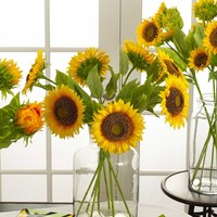 Assorted Long Stem Sunflowers