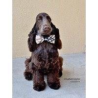 Plaid Burly wood wedding bow tie attached to dog collar, Chic wedding ideas , Wedding dog collar